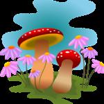 mushrooms, autumn, fungi-1992408.jpg