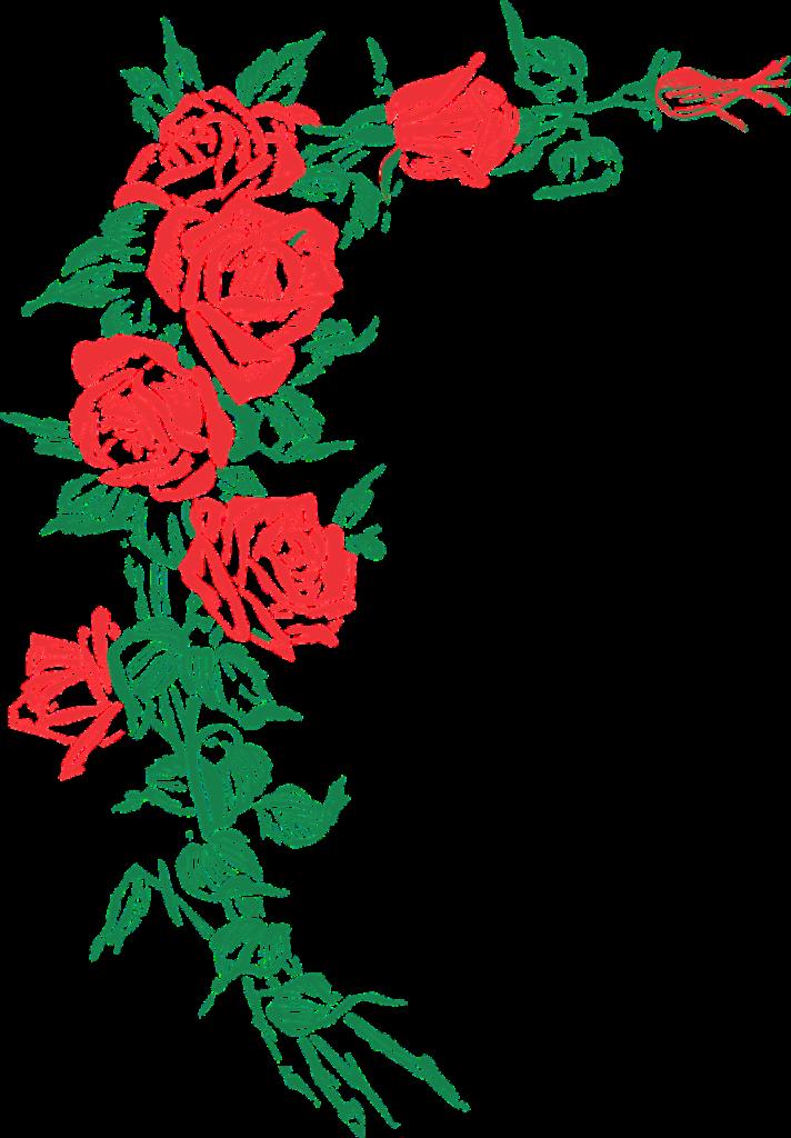 rose, roses, floral-2775953.jpg